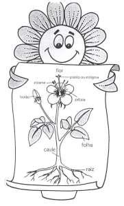Partes das plantas