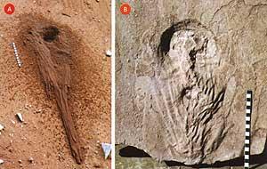 Araraquara, rastro fossilizado