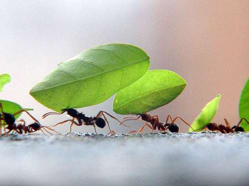 formigas-em-fila-carlos-weiker