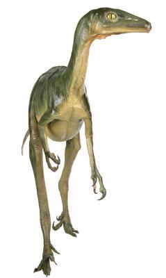 troodon1140459314