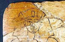 farao-frontal