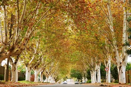 outono-cores-foz-do-iguacu1