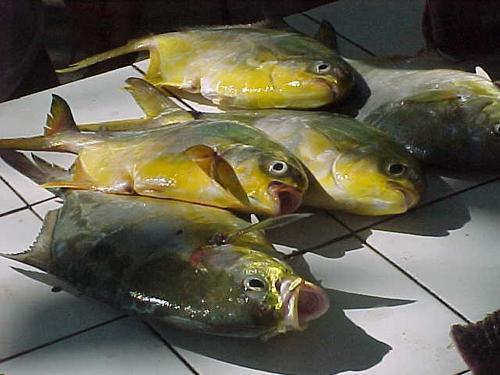 peixes-mercado-de-pescadores-praia-de-copacabana1