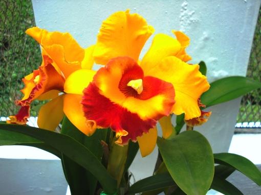fotos jardim cultural: nao-nos-convencessem-de-serem-plantas-vivas-orquidea-foto-ladyce-west