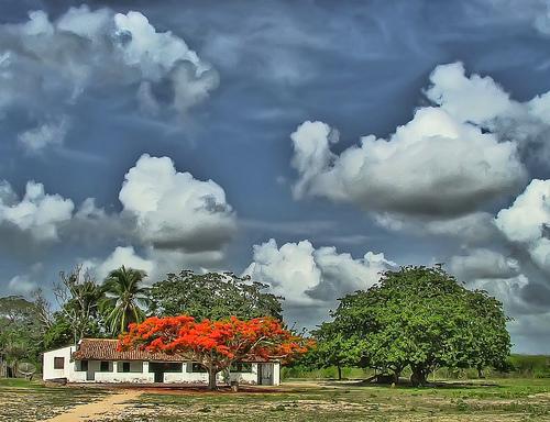 chuva no sertão fotgrafia de Pedro Cavalcante, Flickr