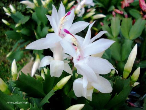 Flores delicadas, foto: Ladyce West
