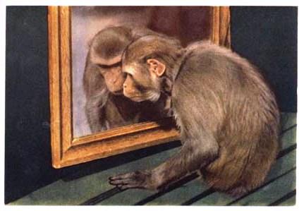 macaco com espelho