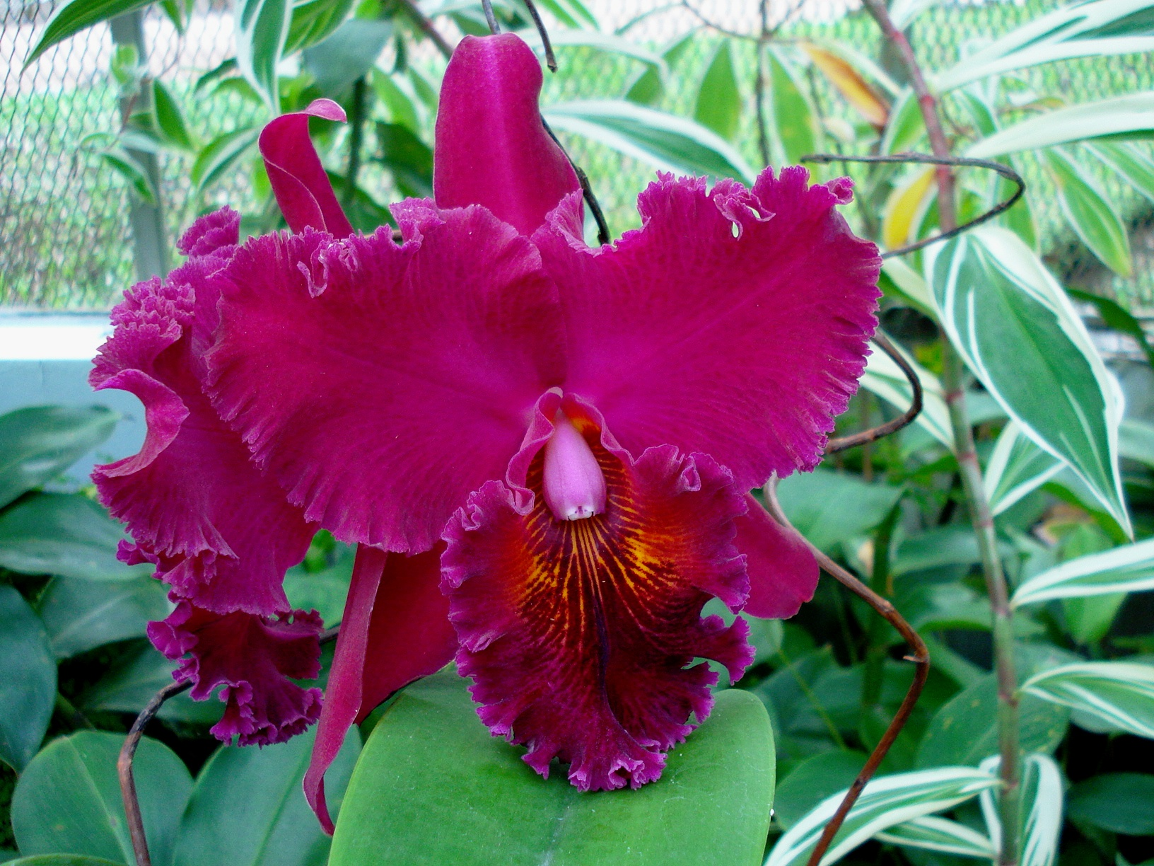 rosas no jardim poema : rosas no jardim poema:Um exposição de orquídeas no Jardim Botânico III