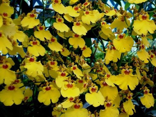 fotos jardim cultural:Um exposição de orquídeas no Jardim Botânico I