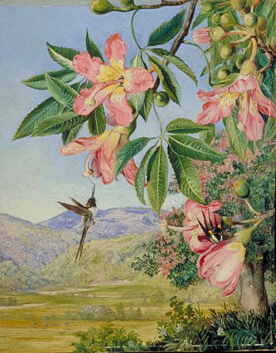 beija-flor do brasil,