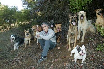 Cesar Milan e um monte de cachorros