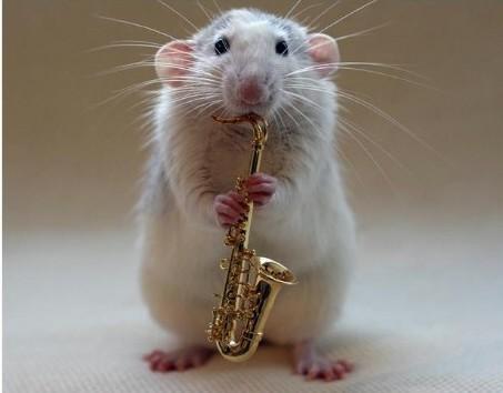 rato sax