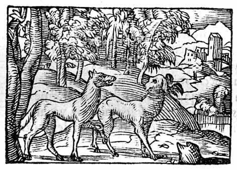 le loup et le chien bernard salomon, 1547