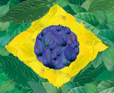 bandeira, Morandini, designer, de seu blog