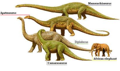 sauropodes2