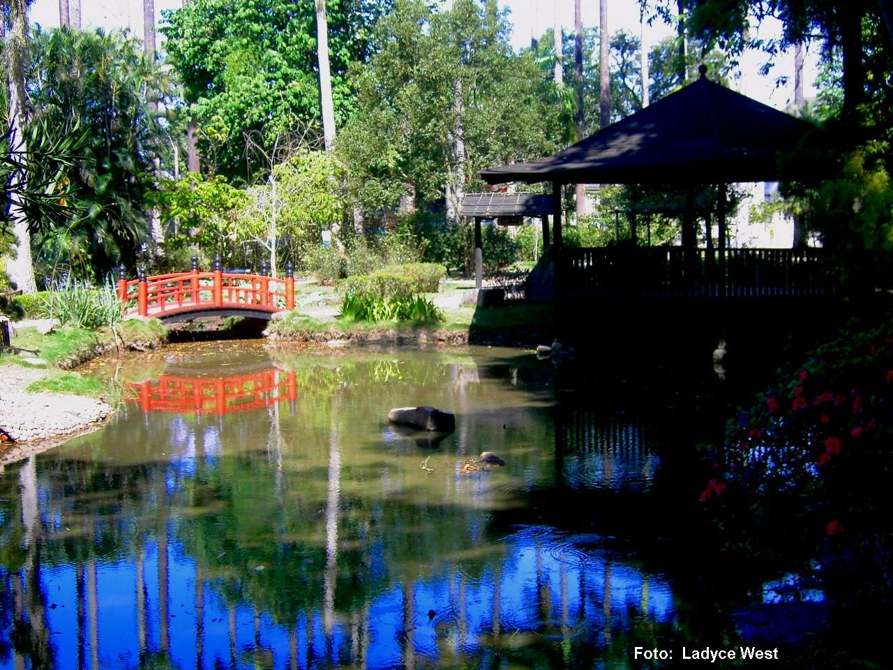 fotos jardim botanico do rio de janeiro:Manhã de sol no Rio de Janeiro, passeio no Jardim Botânico