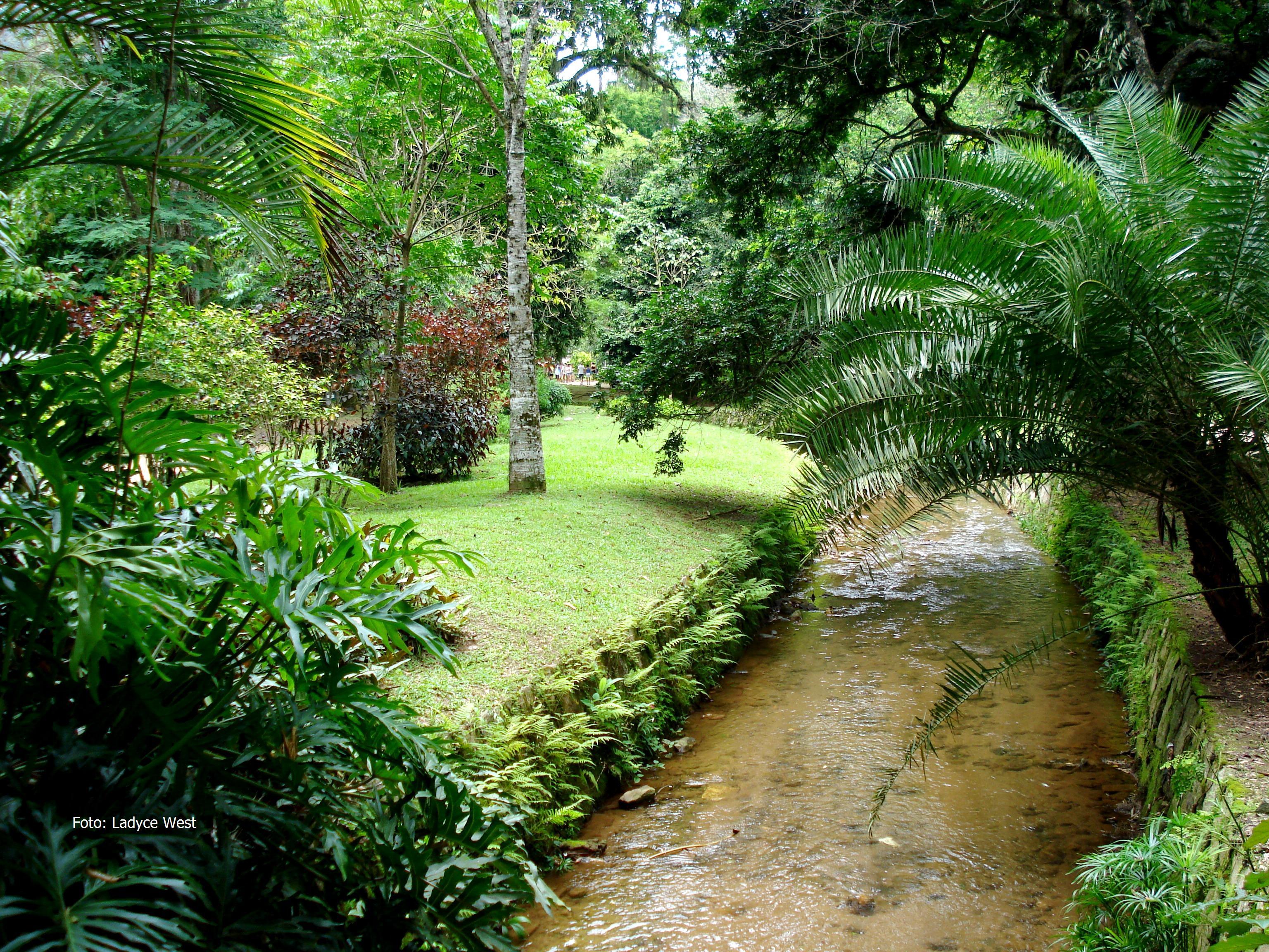 fotos jardim cultural:Córrego no Jardim Botânico do Rio de Janeiro, Foto: Ladyce West.