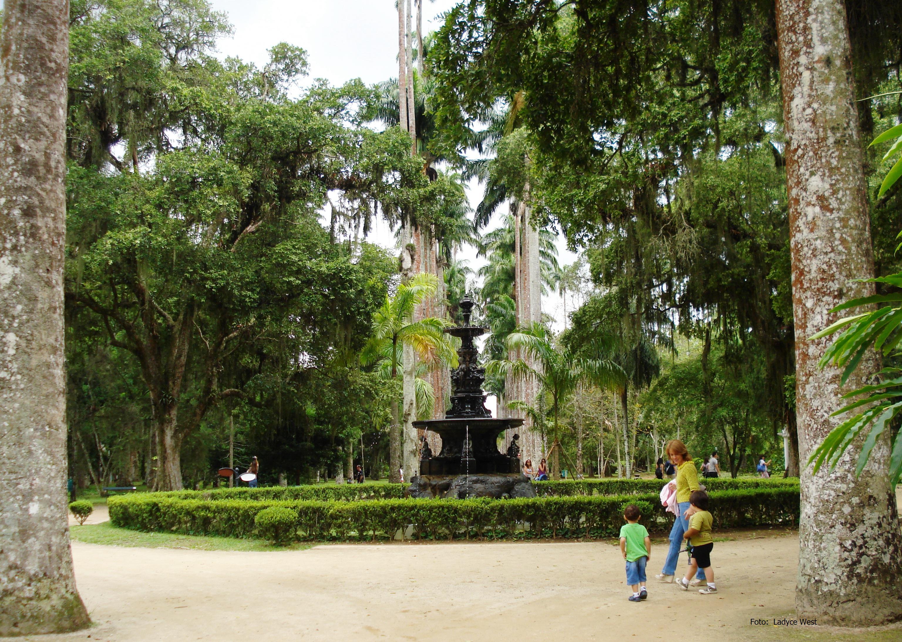 Central Do Jardim Botânico Do Rio De Janeiro, Foto~ Fotos No Jardim Botanico