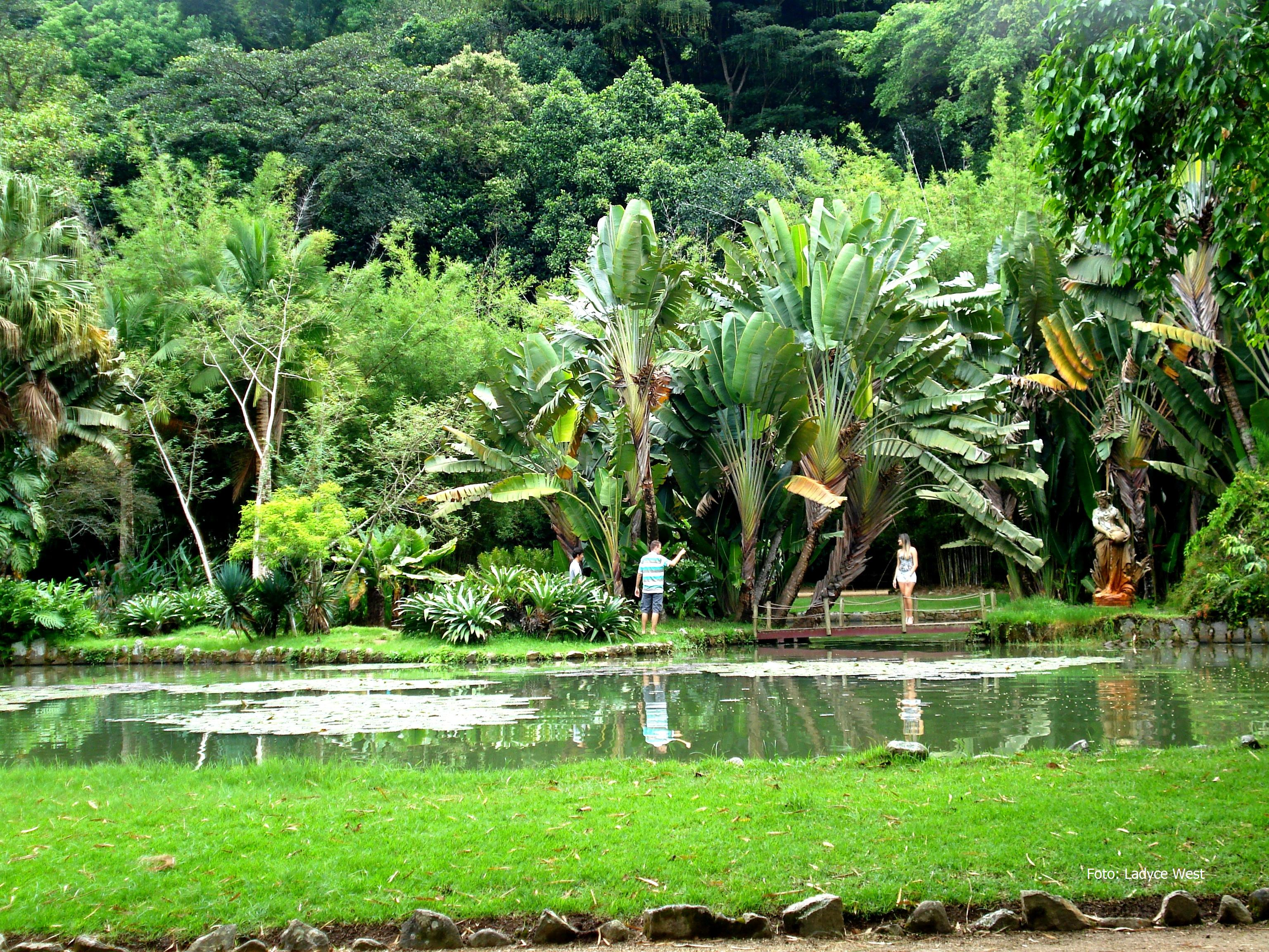 fotos jardim botanico do rio de janeiro:Jardim Botânico do Rio de Janeiro em fim de tarde
