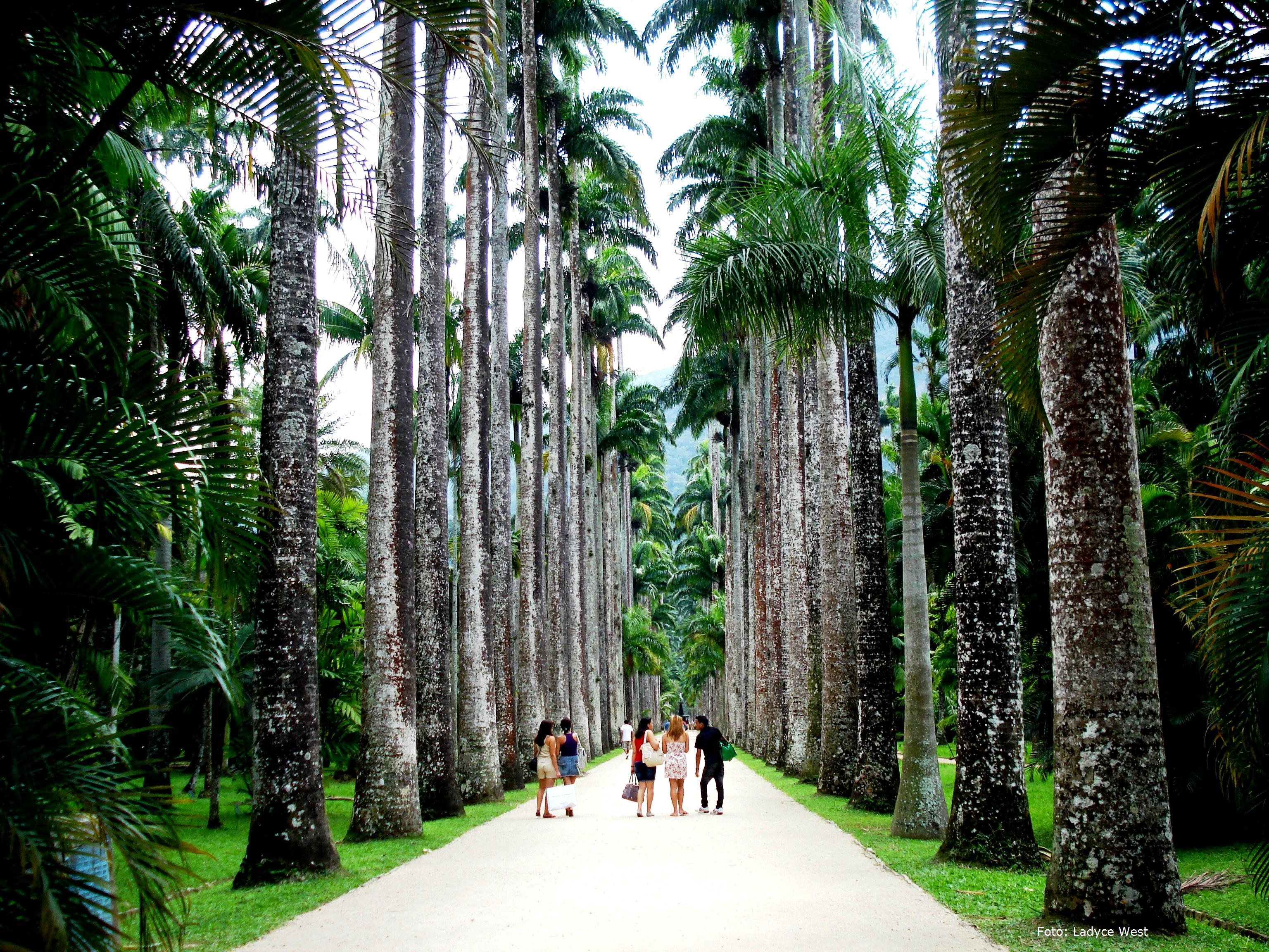 fotos jardim botanico do rio de janeiro:Jardim Botanico Rio De Janeiro Brazil