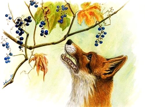 le-renard-et-les-raisins_jacot.jpg
