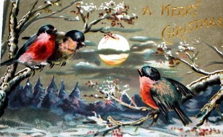 1 -- christmasbirdspc