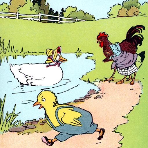 pato e galinha