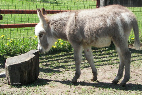 baby-donkey-newmy-video-happe-yrlings-051-3