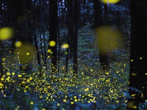 4-criaturas-de-luz-exposicao-bbc-vaga-lumes