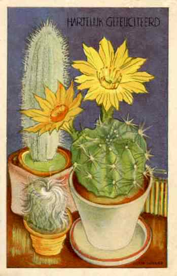 cactus 8