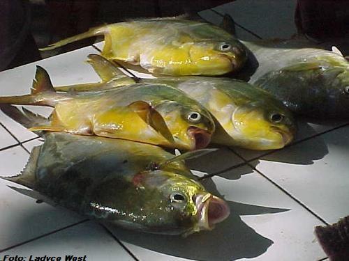 Peixes, Mercado de Pescadores, Praia de Copacabana2