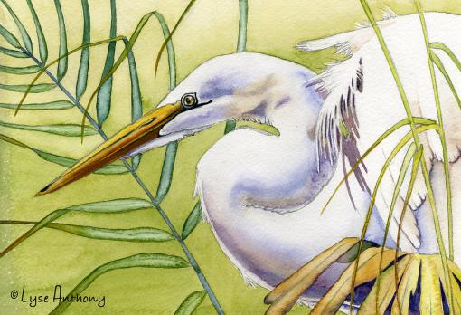 egret-lyse-anthony