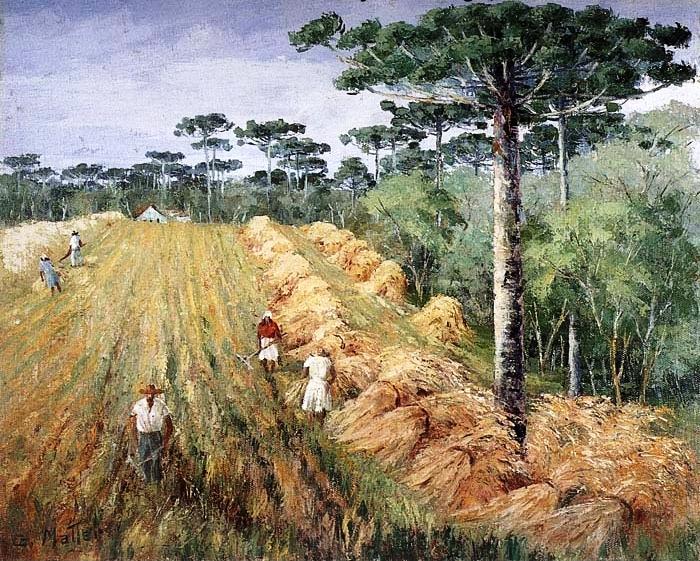Guilherme Matter (1904 -1978) plantação de trigo no Paraná.