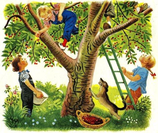 colheita de frutas