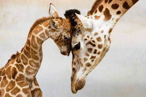 animal-parents-5