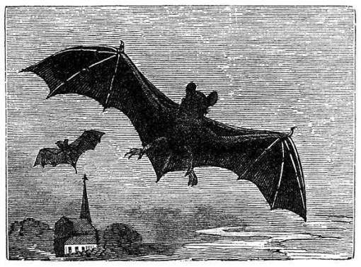 morcego, ilustração em preto e branco
