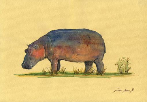 1-hippo-watercolor-painting-juan-bosco