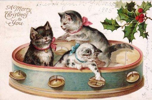 3-gatinhos-no-pandeiro