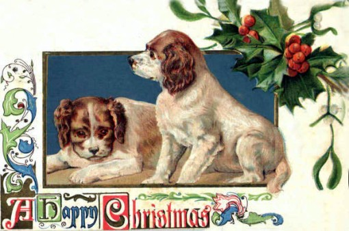 cachorrinhos-438n1