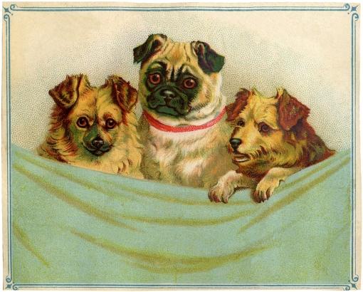 velho-cartao-tres-cachorrinhos