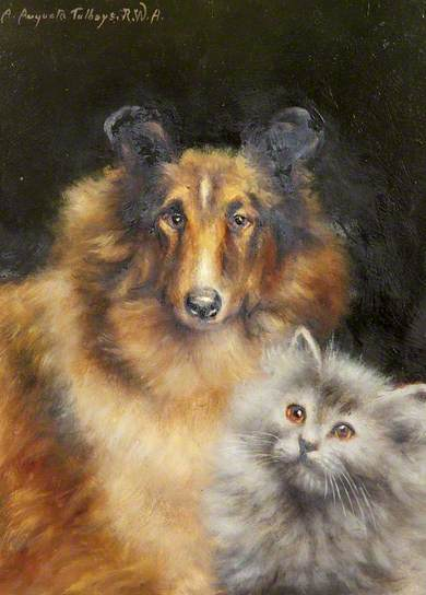 A-Study-of-a-Collie-and-a-Cat-Agnes-Augusta-Talboys