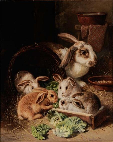 barberm alfred r. coelhos comendo alface
