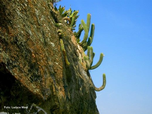 cactus no Leme