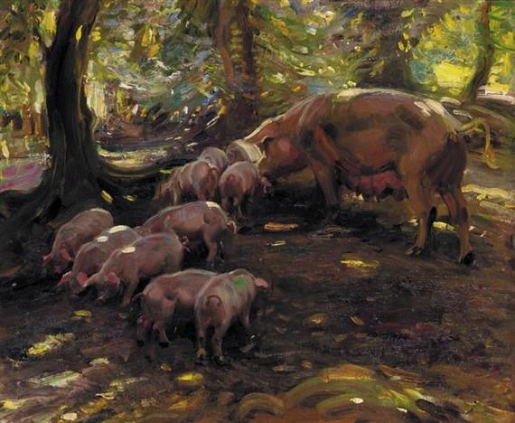porcos no bosque