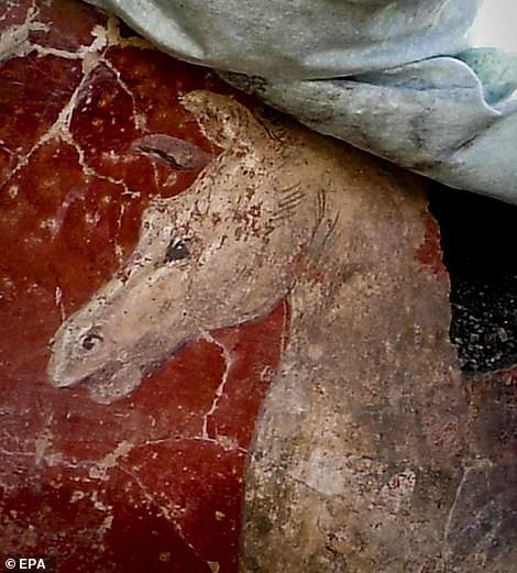 pompeia 9a
