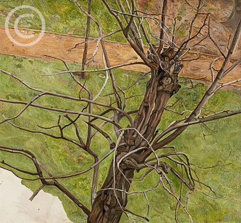 lucian-freud--acacia--1975-oil-on-canvas-45cmx51cm
