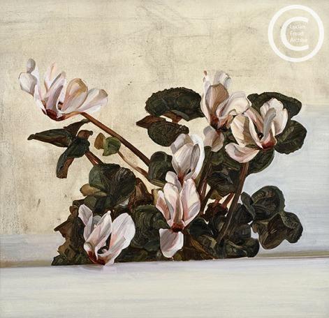 lucian-freud--cyclamen--1964-oil-on-canvas-457cmx49